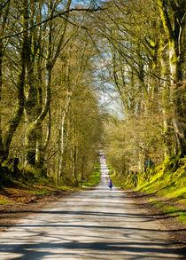 Wooded-lane-2