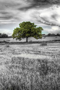 The solitary farm tree von David Pyatt