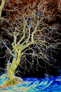 Ghostly Tree's by Dave  Byrne