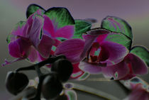 Orchid-good-g