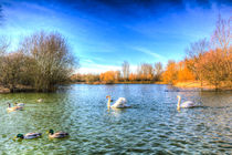 The Peaceful Swan Lake by David Pyatt