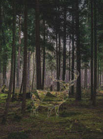 Stag in the woods von Florian Barfrieder