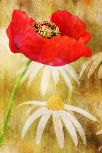 Poppies and Daisies by Clare Bevan