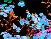 Blaukissen Surreal  by Sandra  Vollmann