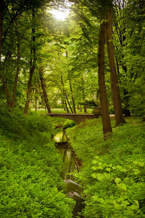 Green spring trees and stream by Arletta Cwalina