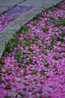 Blütenregen... 2 von loewenherz-artwork