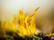 The moss von brava64