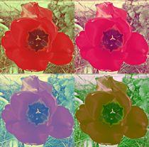 Pop-art tulip's 1 von Amanda Elizabeth  Sullivan