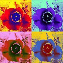 Pop-art tulip's 2 von Amanda Elizabeth  Sullivan
