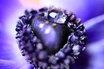 Violette Nature von malin