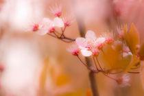 Frühlingsblüte im Norden von fraenks