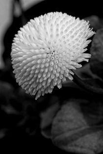 Weisse Blume by Andreas Jeckstadt