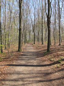 Wanderweg durch einen Laubwald im Frühling by Heike Rau