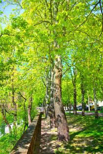 Ein frühlingshafter Park in Aschaffenburg von Gina Koch