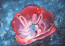 Tulpe und die Sterne von Lidija Kämpf