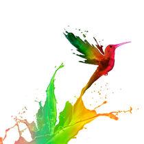 Hummingbird colours by Miguel Tejeda