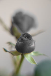 A black rose for your sweetheart... von Peter-André Sobota