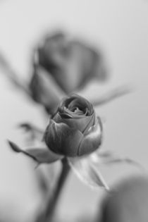A black rose for your sweetheart... by Peter-André Sobota