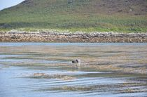 Seal by Malcolm Snook