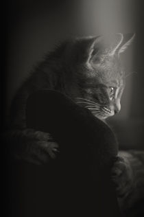The Mystery of a Cat's Thoughts by loriental-photography