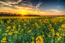 The April Farm von David Pyatt