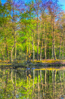 Reflections From The Pond von David Pyatt