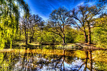 Pond Reflections von David Pyatt