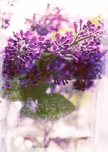Lilac by Sybille Sterk