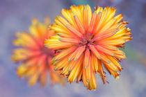 Flowers 0326 von Mario Fichtner
