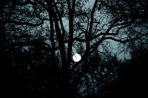 Zwischen Fenster & Mond von Bastian  Kienitz