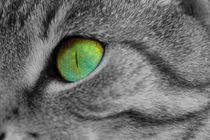 Grünes Katzenauge von beckert-design