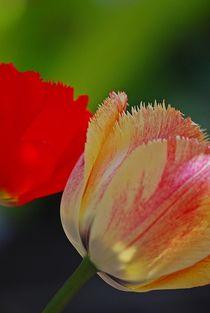 tulips in love... 1 von loewenherz-artwork