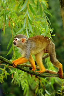 Monkey von malin
