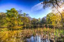 Bullrush-pond