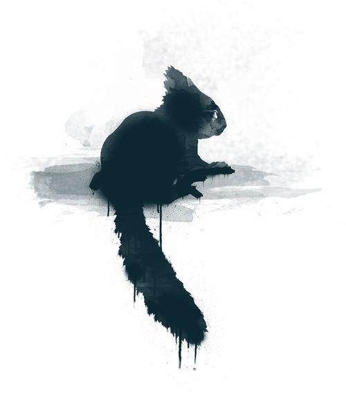Little-squirrel