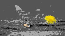 Bordsteinorchidee von Thomas Haas