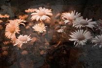 Asphaltblumen by Nicole Frischlich