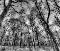 The Infared Forest von David Pyatt