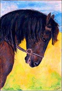 Aquarell Black Horse Portrait  by Sandra  Vollmann
