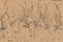 Longhorn cows by Elisaveta Sivas