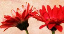 Red Texture von Clare Bevan
