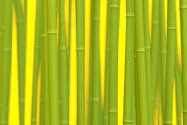 Digital Bamboo von dresdner