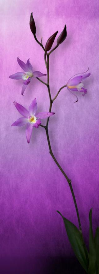 Orquidea-comp-flat