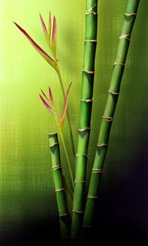 Bamboo Window by Cesar Palomino