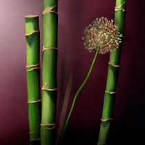 Bamboos with Garlic Flower von Cesar Palomino