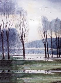 Pappeln,trees von Beate v.d.Sand