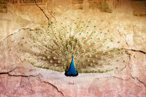 Peacock bird textured abstract von Arletta Cwalina