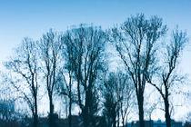 Blue trees sadness von Arletta Cwalina