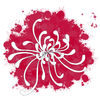 Chrysanthemum-new-copy