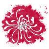 Chrysanthemum-new-copy